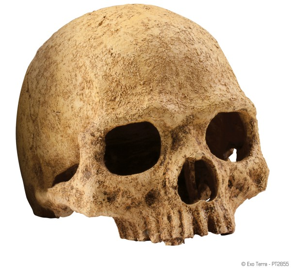 Exo Terra Skulls
