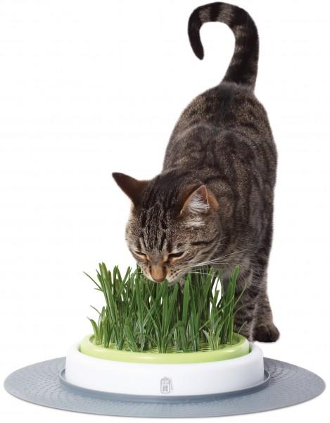 Catit Grass Garden Kit